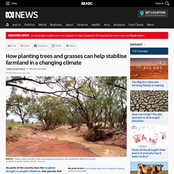 How planting trees and grasses can help stabilise farmland in a changing climate