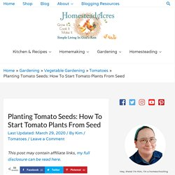 Planting Tomato Seeds: How To Start Tomato Plants From Seed - Homestead Acres