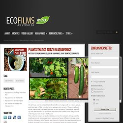 Plants that go crazy in Aquaponics | Ecofilms