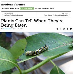 Plants Can Tell When They're Being Eaten