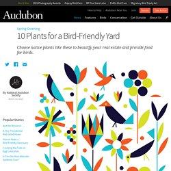 10 Plants for a Bird-Friendly Yard