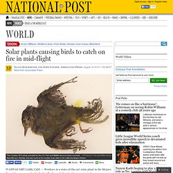 Solar plants causing birds to catch on fire in mid-flight