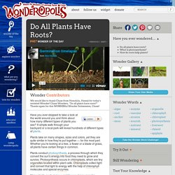Do All Plants Have Roots?