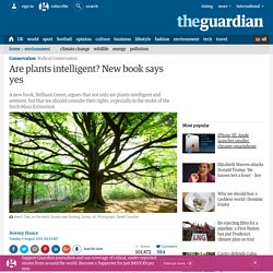 Are plants intelligent? New book says yes