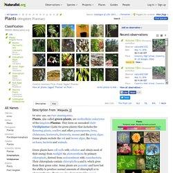 Plants (Kingdom Plantae)