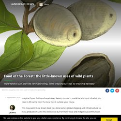Wild plants' little-known uses captured in Food of the Forest project