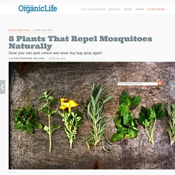 8 Plants That Repel Mosquitos Naturally
