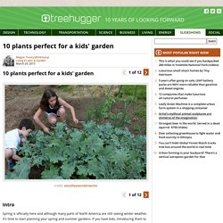 10 plants perfect for a kids' garden