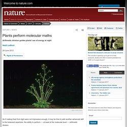 Plants perform molecular maths
