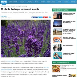 16 plants that repel unwanted insects