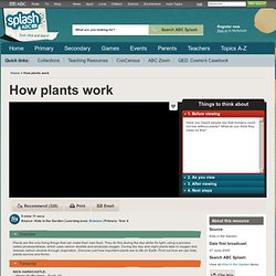 How plants work - Science (4) - ABC Splash -