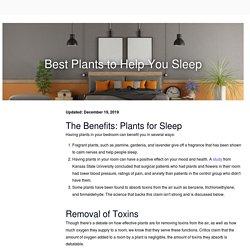 The Best Plants to Help You Sleep - Start Sleeping