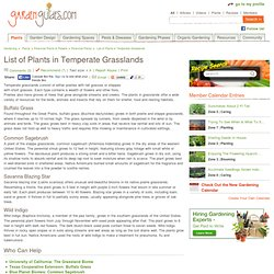 List of Plants in Temperate Grasslands