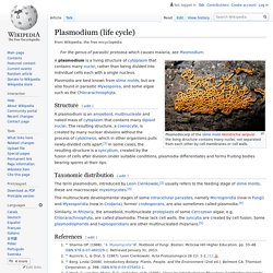 Plasmodium (life cycle)