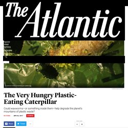 The Very Hungry Plastic-Eating Caterpillar - The Atlantic