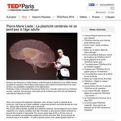 La plasticité cérébrale ne se perd pas à l'âge adulte