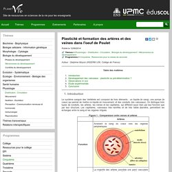 Plasticité et formation des artères et des veines dans l'oeuf de Poulet