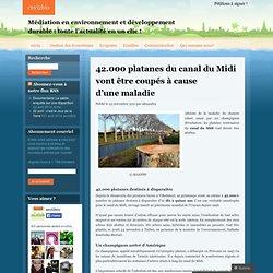 42.000 platanes du canal du Midi vont être coupés à cause d'une maladie