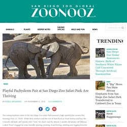 Playful Pachyderm Pair at San Diego Zoo Safari Park Are Thriving