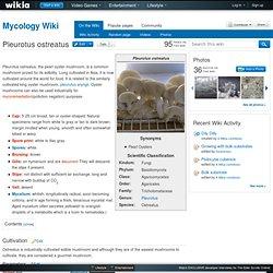 Pleurotus ostreatus - Mycology Wiki