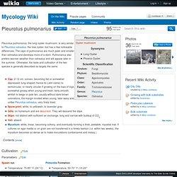 Pleurotus pulmonarius - Mycology Wiki