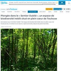 """Plongée dans le """"Sentier Oublié"""", un espace de biodiversité inédit situé en plein cœur de Toulouse"""