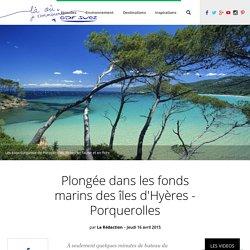 Plongée dans les fonds marins des îles d'Hyères - Porquerolles