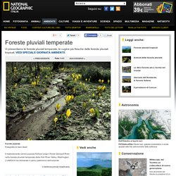 Foto Foreste pluviali temperate