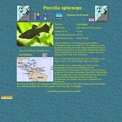 Poecilia sphenops