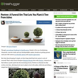 Poetree: A Funeral Urn That Lets You Plant A Tree From Ashes