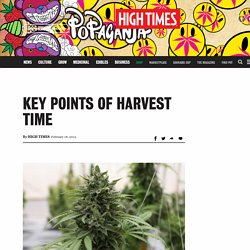 Key Points of Harvest Time – High Times