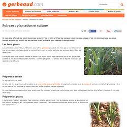 Poireau : plantation et culture
