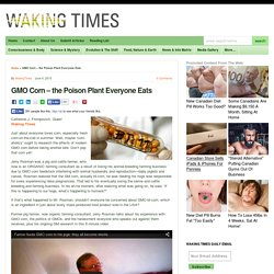 GMO Corn - the Poison Plant Everyone Eats