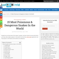 15 Most Poisonous & Dangerous Snakes In the World