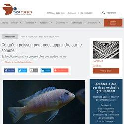 Ce qu'un poisson peut nous apprendre sur le sommeil - Thot Cursus
