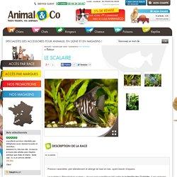 Poisson Le Scalaire – Fiche conseils – Animal & Co