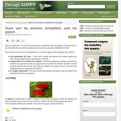 Quels sont les poissons compatibles avec les guppys :