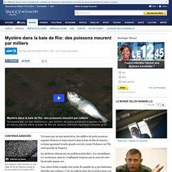 Mystère dans la baie de Rio: des poissons meurent par milliers