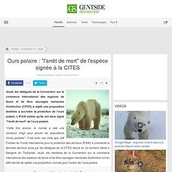 """Ours polaire : """"l'arrêt de mort"""" de l'espèce signée à la CITES"""