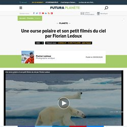 Une ourse polaire et son petit filmés du ciel par Florian Ledoux