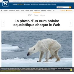 La photo d'un ours polaire squelettique choque le Web