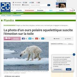 La photo d'un ours polaire squelettique suscite l'émotion sur la toile