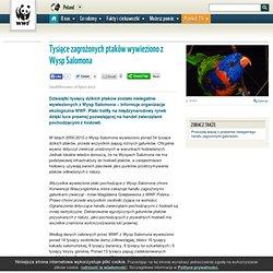 WWF Poland - Tysiące zagrożonych ptaków wywieziono z Wysp Salomona