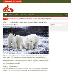 What Do Polar Bears Eat? Learn About The Arctic Bear Feeding Habits