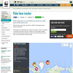 Polar bear tracker