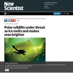 Polar wildlife under threat as ice melts and makes seas brighter