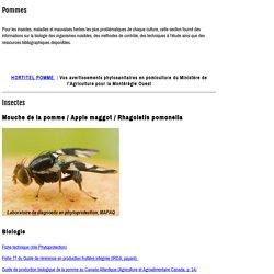 MAPAQ 09/05/13 Lutte contre le carpocapse de la pomme par la confusion sexuelle! Témoignage de réussite en Suisse et au Québec