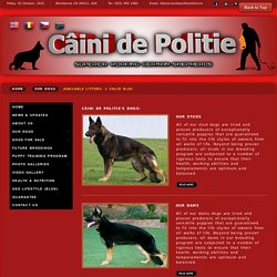 Câini de Politie - Our Dogs (Superior Working GSD Kennel)