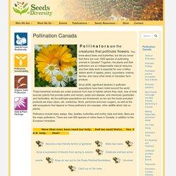 Pollination Canada