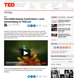 The hidden beauty of pollination: Louie Schwartzberg on TED